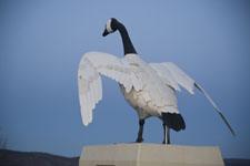 Wawa goose photo