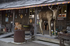 Henrietta the Moose photo - Young's General Store - Wawa