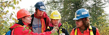 Forestry banner photo