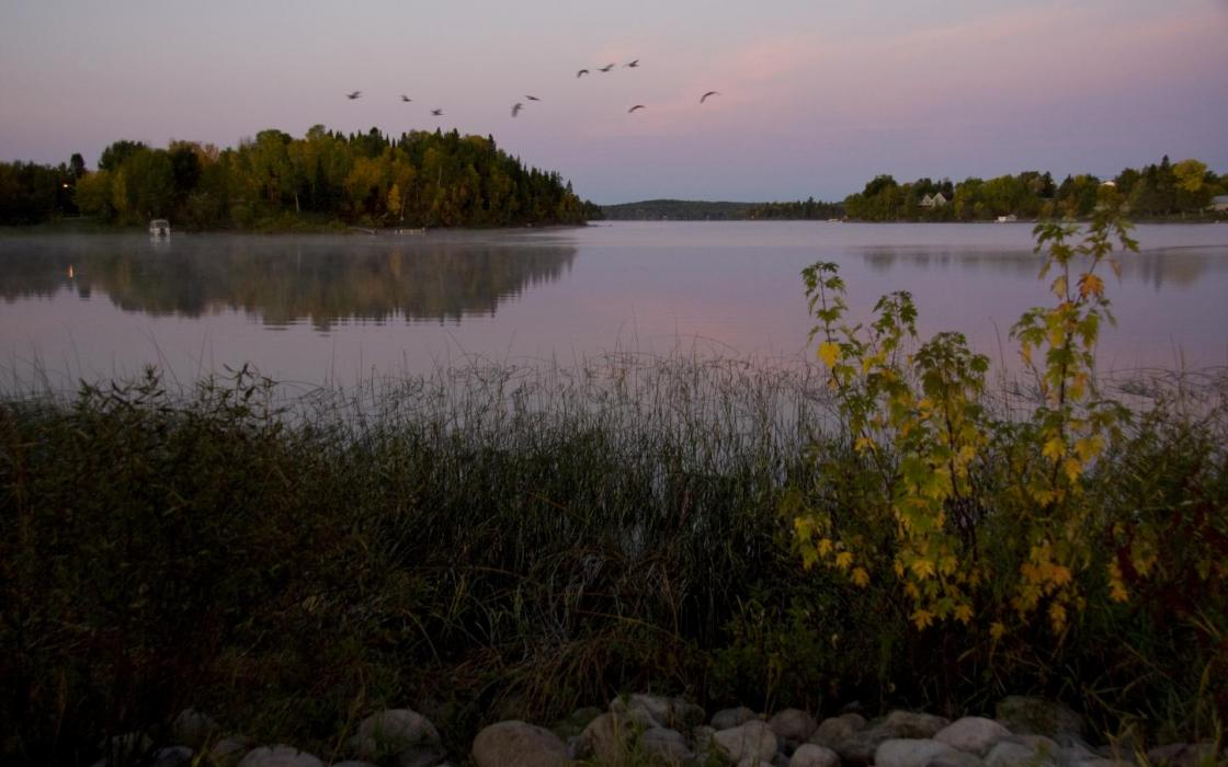 Flock of duck getting ready to head south from Sioux Lookout