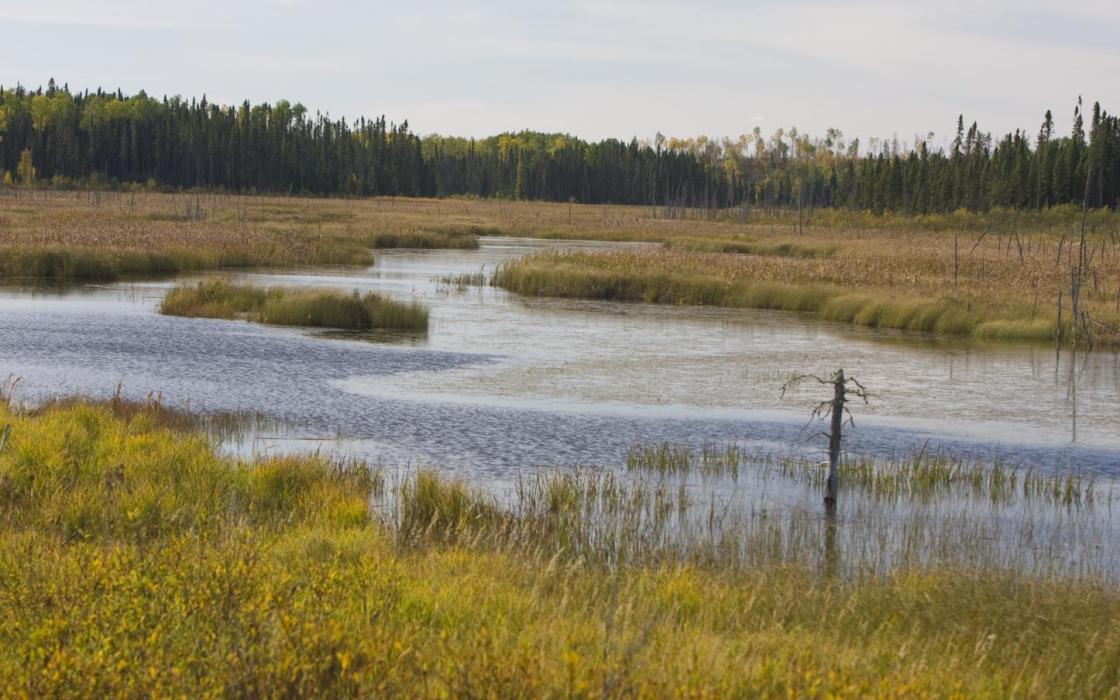 wetlands near Sioux Lookout