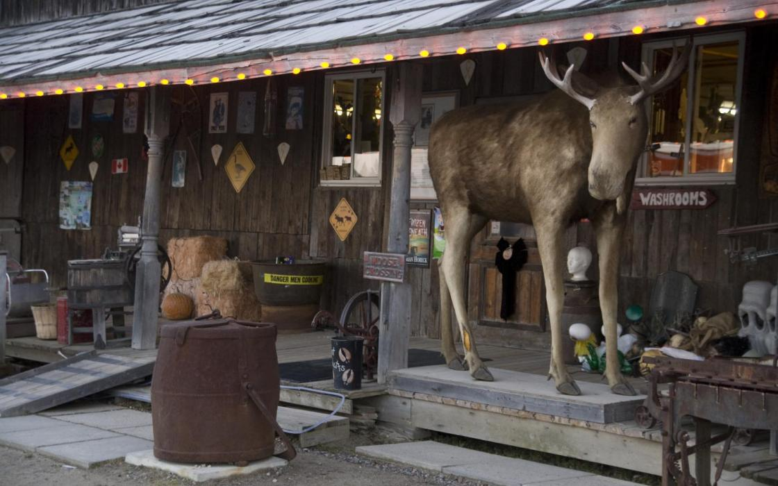 Henrietta the Moose at Young's General Store - Wawa